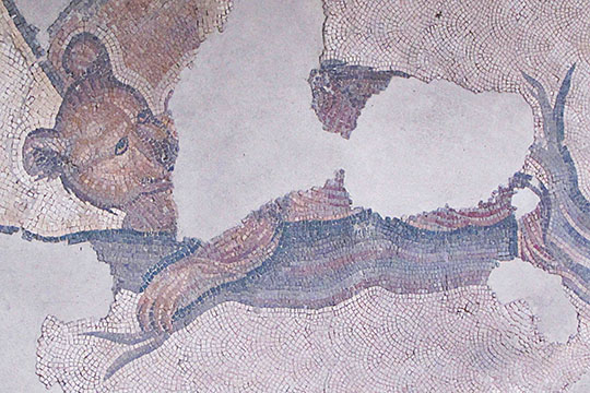 bear mosaic in the Great Palace Mosaic Museum, Sultanahmet, Istanbul at The Cheshire Cat Blog