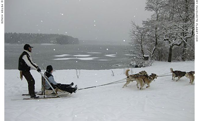 Dog-sledding on Langer See near Grünau by Peter Hinze at The Cheshire Cat Blog