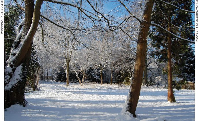 Trees in the snow by Martine Passagez at The Cheshire Cat Blog