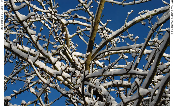 Snow-covered tree branches by Martine Passagez at The Cheshire Cat Blog
