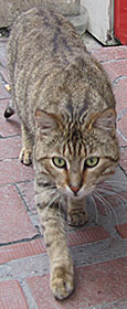 Cat on the prowl in Kumkapi, Istanbul at The Cheshire Cat Blog