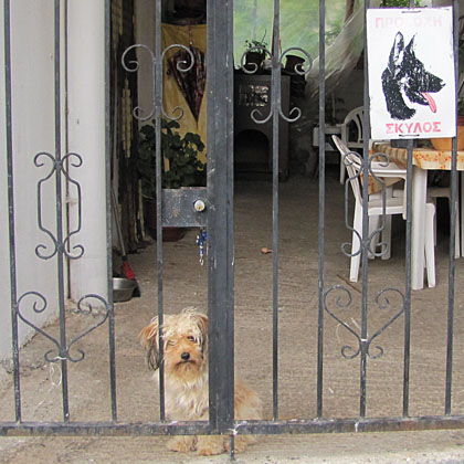 A huge, ferocious guard dog in Kalambaka, Meteora, Greece at The Cheshire Cat Blog