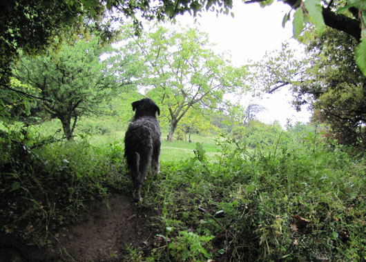 Spot the dog shows the way to the secret paths of Meteora at The Cheshire Cat Blog