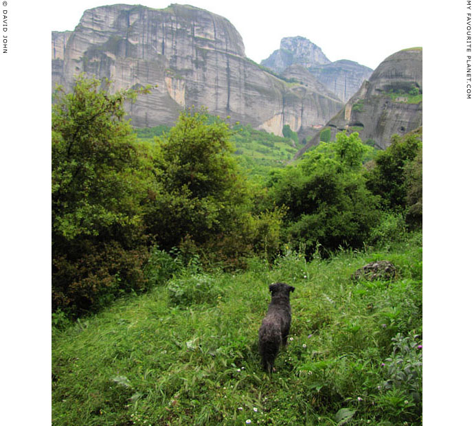 Spot the Dog surveys the landscape of Meteora, Greece at The Cheshire Cat Blog