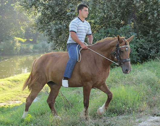horse riding in Didymoteicho, Thrace, Greece at The Cheshire Cat Blog