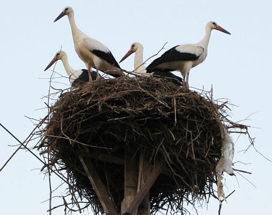 Storks' nest in Koufovouno, Thrace, Greece at The Cheshire Cat Blog