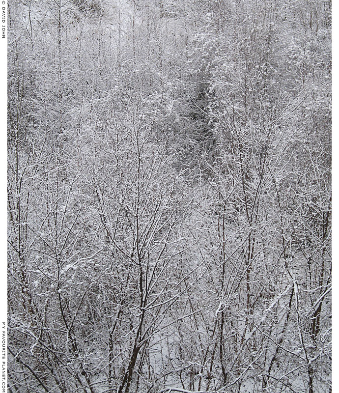 Winter forest at The Cheshire Cat Blog