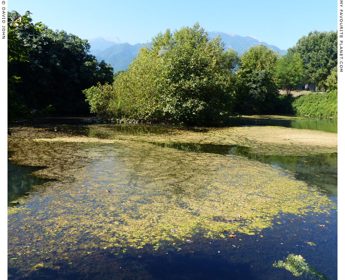 A small lake in Dion Archaeological Park, Macedonia at The Cheshire Cat Blog