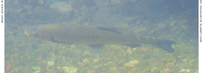 a fish in Dion Archaeological Park, Macedonia at The Cheshire Cat Blog
