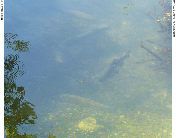 Furtive fish in Dion Archaeological Park, Macedonia at The Cheshire Cat Blog