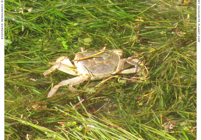 An unexpected crab in Dion Archaeological Park, Macedonia at The Cheshire Cat Blog