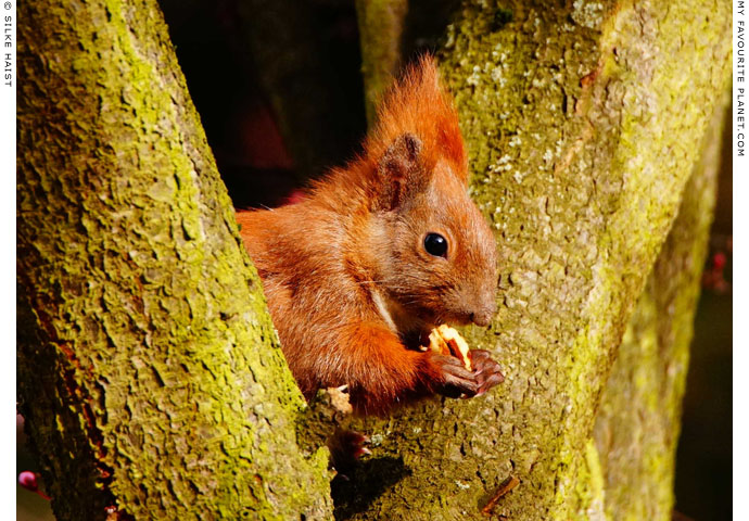 A squirrel eating a nut in Berlin, Germany at The Cheshire Cat Blog