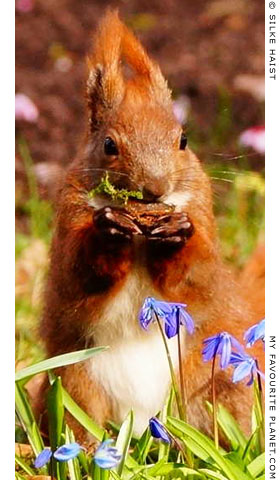 A squirrel having breakfast by Silke Haist at The Cheshire Cat Blog