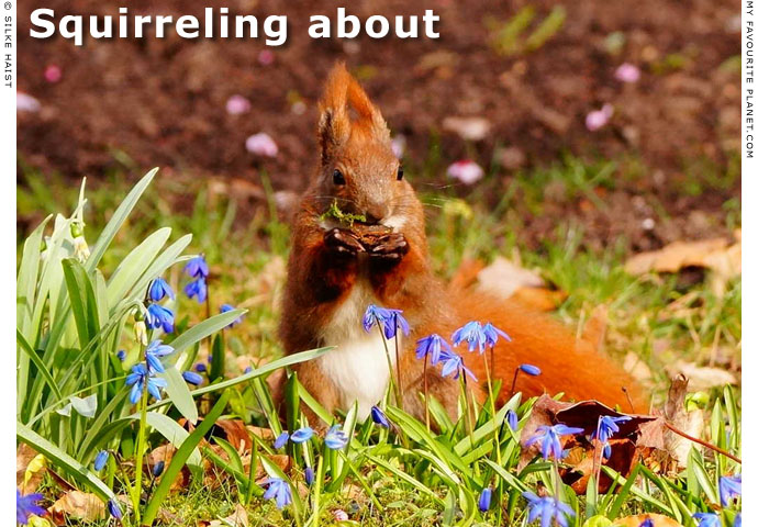Squirreling about, photos by Silke Haist at The Cheshire Cat Blog