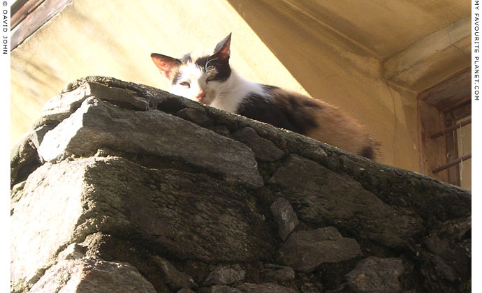 Kavala cat at My Favourite Planet