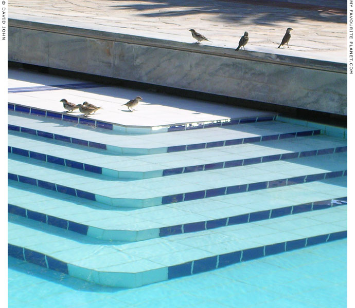 Sparrows at the swimming pool in Pythagorio, Samos, Greece at My Favourite Planet