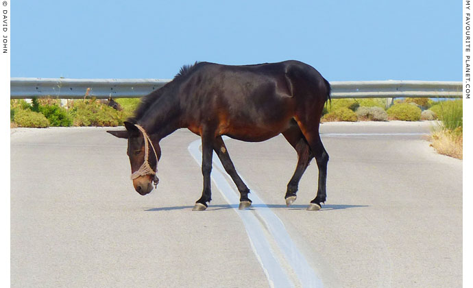 Mule crossing the road on Samothraki, Greece at My Favourite Planet