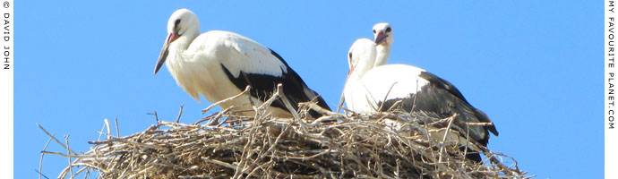 A stork family in their nest in the centre of Soufli, Thrace, Greece at My Favourite Planet