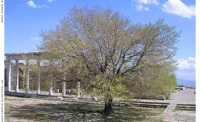 A tree in the Trajaneum of the Pergamon Acropolis, Turkey at My Favourite Planet